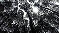 Hutan Pinus Imogiri (3).jpg