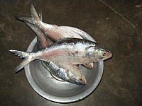 List of fishes in Bangladesh - Wikipedia