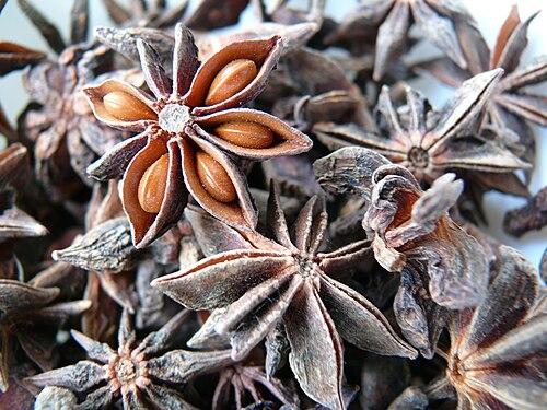 Illicium verum macro 2