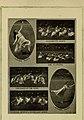 Illustrated bulletin (1917) (14761667626).jpg