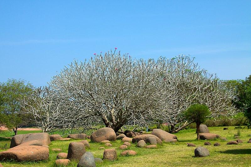 India - TN - 11-01 - Auroville - 06 (5445461242).jpg