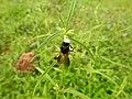 Insect from Madayipara DSCN2635.jpg