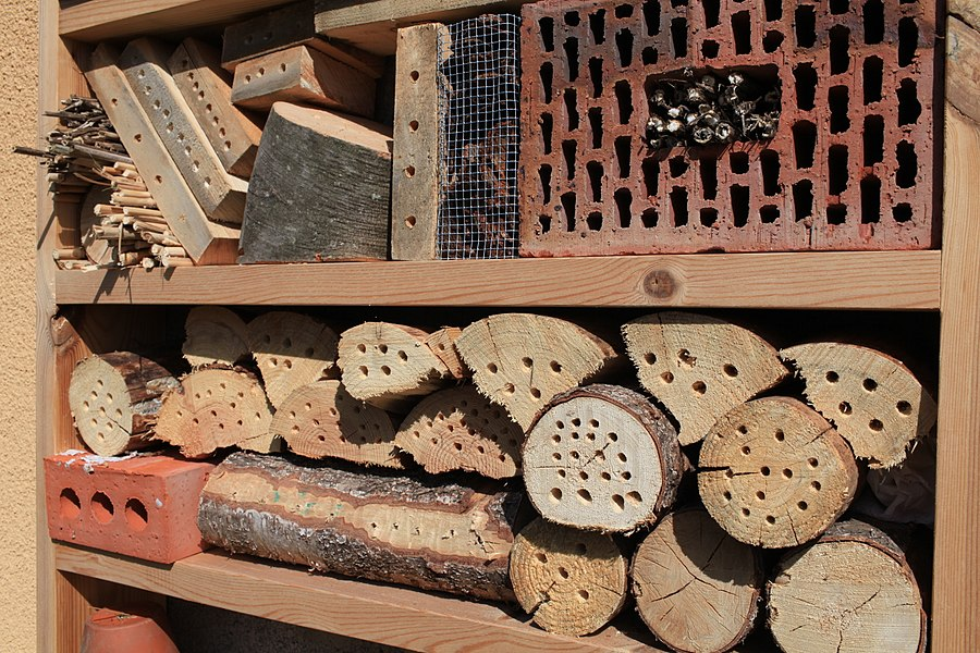 I did an insect hotel to replace an old door that is not used anymore. The insect is oriented towards the south.  After 3 days, I got already 4 bombus lapidarius using the hotel. A lot of insects are underestimated regarding their capacity of pollination. As an example, various bombus are much more efficient to pollinate than the non-wild bees like the apis mellifera.  J'ai fait un hôtel à insectes avec du matériel de récupération pour remplacer l'espace d'une vielle porte. L'hôtel est orienté vers le sud. Après 3 jours, j'avais déjà 4 bombus lapidarius qui occupent l'hotel. Beaucoup d'insectes sont sous-estimés pour leur capacités de pollinisation. On parle souvent de l'abeille domestique mais les espèces sauvage pollinisent plusieurs espèces que les abeilles ne peuvent pas pollinisé. Une bonne raison pour les accueillir...