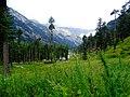 Inside Kumrat Valley August 2016.jpg