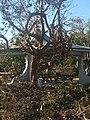 Irma Recovery Teams (37294264515).jpg