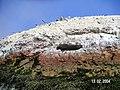 Islas Ballestas - panoramio (7).jpg