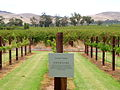Jacob's Creek. Grenache. Barossa Valley SA.jpg