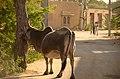 Jaisalmer (Rajastão), RTW 2012 (8405076207).jpg