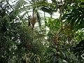 Jardin des plantes Paris Serre tropicale4.JPG