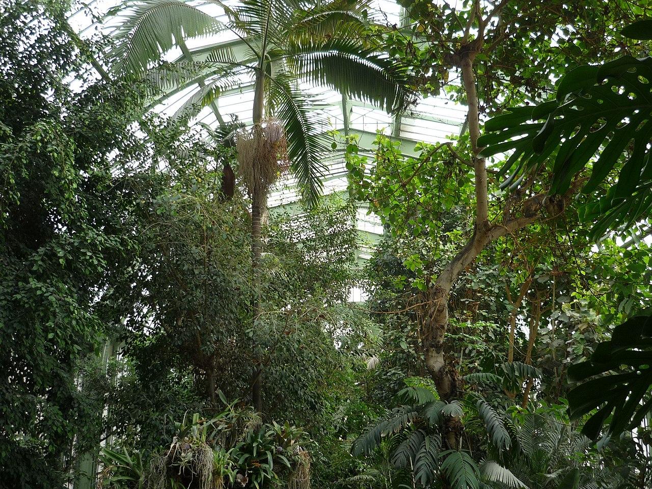 File jardin des plantes paris serre tropicale4 jpg for Plantes paris