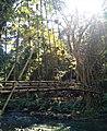 Jembatan Gantung Bambu di Suku Baduy Luar.jpg