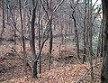 Jena 1999-01-17 30.jpg