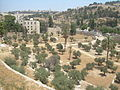 Jerusalem, Mount of olives 3860.JPG