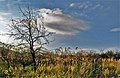 Jesenný motív I. - panoramio.jpg