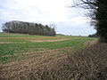 Jubilee Spinney, Sutton Heath, Peterborough - geograph.org.uk - 94733.jpg