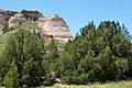 Juniperus scopulorum in a dry wash, Pawnee Buttes, Colorado (3653081356).jpg