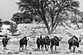 Kalahari Sands Individual Images (146592249).jpeg