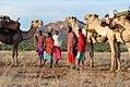 Karisia Walking Safaris Camels in Laikipia, Kenya.jpg