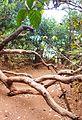 Kasturba Rd, Matheran, Maharashtra 410102, India - panoramio (20).jpg