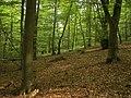 Kellerwald 003.jpg