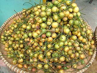 <i>Baccaurea</i> genus of plants