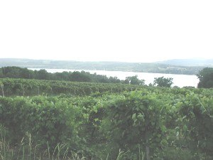 Penn Yan, New York - Vineyard near Keuka Lake, Penn Yan, New York