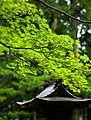 Koyasan 高野山 (Wakayama-Japan) (4950768463).jpg