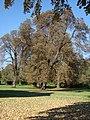 L84 - Parc du château de Brou-sur-Chantereine.JPG