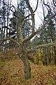LSG Sudmerberg - Bäume (4).jpg