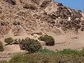 La Oliva, Las Palmas, Spain - panoramio (18).jpg