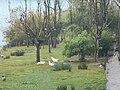 La vora del riu Segre a Balaguer, amb ocells en llibertat - panoramio.jpg