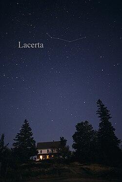 LacertaCC.jpg