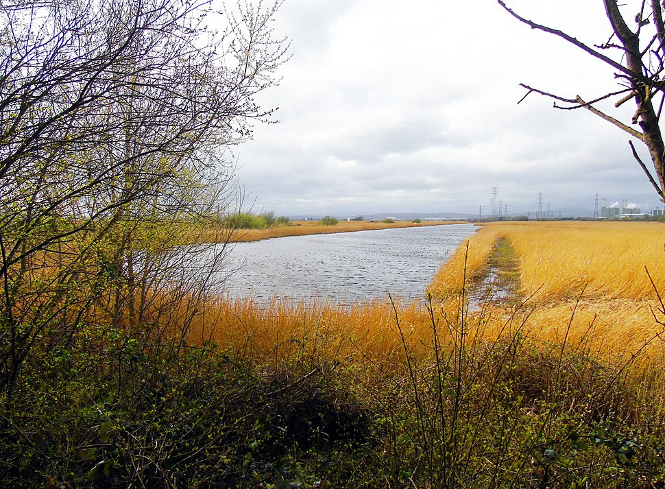 Lagoon R8 overlooked by Newport Wetlands RSPB Reserve Forest Viewing Platform