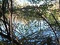 Lambert Lake - panoramio (8).jpg