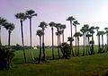 Landscape view at Nidadavole in West Godavari.jpg