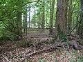 Landschaftsschutzgebiet Pferdebruch Eickholt Melle -Waldanfang- Datei 4.jpg