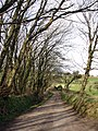 Lane to Bosence Farm - geograph.org.uk - 119807.jpg
