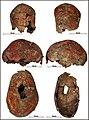 Lapa do Santo - Sepultamento 09 - Cranio todas vistas.jpg