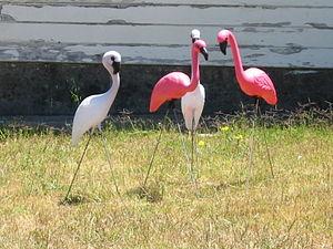 Композиция из четырёх садовых фламинго в Калифорнии