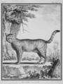 Le Chat sauvage - Wildcat - Felis silvestris - Gallica - ark 12148-btv1b2300253d-f3.png