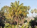 Le Jardin botanique de Palerme (6896303998).jpg