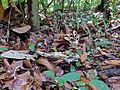 Leaf Litter (15010618104).jpg