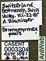Leptothorax pacis casent0003204 label 1.jpg