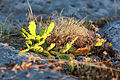 Les petits cactus de l'Ardèche.JPG