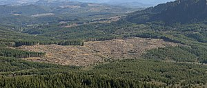 Clearcutting - After a century of clearcutting, this forest, near the source of the Lewis and Clark River in Clatsop County, Oregon, is a patchwork. In each patch, most of the trees are the same age.