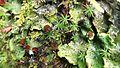 Lichen and Moss - Flickr - brewbooks.jpg