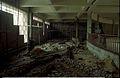 Life Science Corner Under Construction - Dynamotion Hall - Science City - Calcutta 1996-07-30 328.JPG