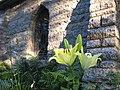 Lilies and Chapel Window, Grasshopper Chapel, July 2010 - panoramio.jpg