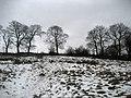 Line of Trees on Knotts Lane - geograph.org.uk - 1161151.jpg