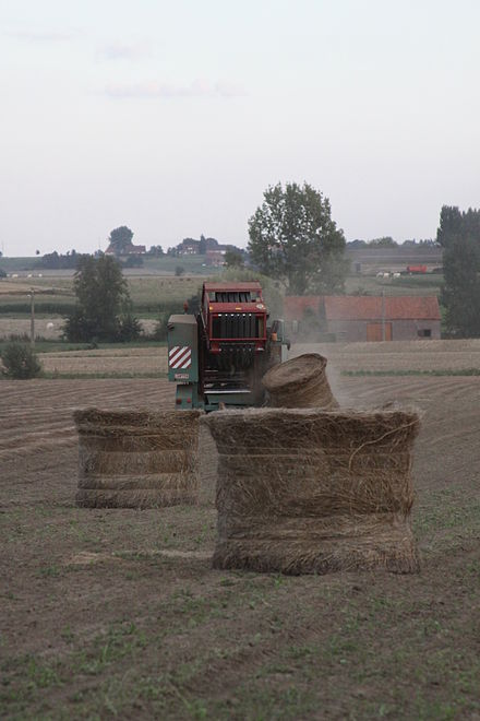 Mechanical baling of flax in Belgium. On the left side, cut flax is waiting to be baled. LinenMechanicalHarvesting-Summer2009-Belgium.JPG